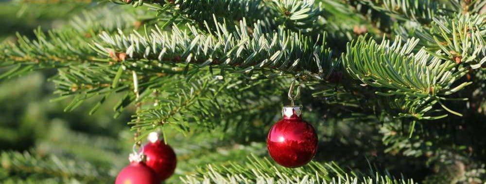 Weihnachtsbäume Hof Reuter